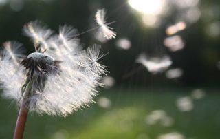 alergia asma primavera